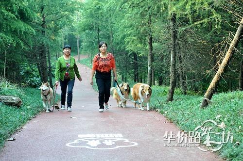 业主论坛 城东片 (h) 华汇康城 > 南京环紫金山绿道落成启用,市民可骑