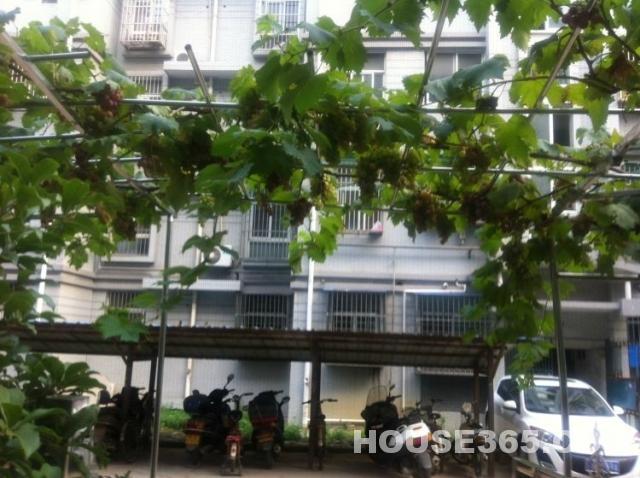 买房子送葡萄树未来地铁口墨香路精装修送阳光房送大院子 一楼地