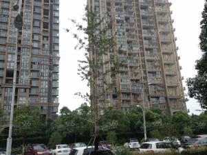 中海钱塘山水,杭州中海钱塘山水二手房租房